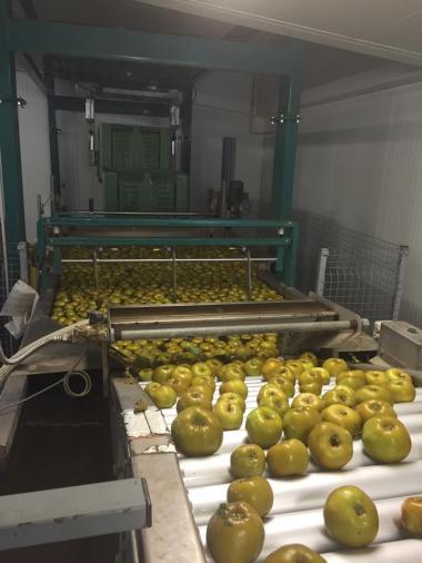tissot pommes.jpg